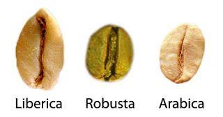 arabica liberica robusta