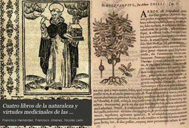 Az első latin írások  a chilli fűszerről
